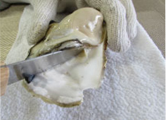 Q1殻付き牡蠣の剥き方が分からない
